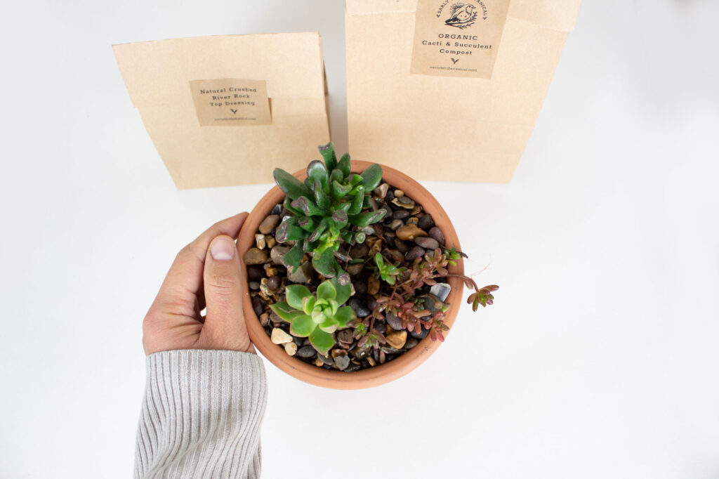 make your own succulent and cacti planters